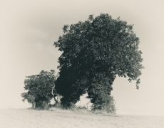 «Sérénissime nature», les photos de Gilles Molinier. Galerie Hegoa du 14 avril au  21mai.